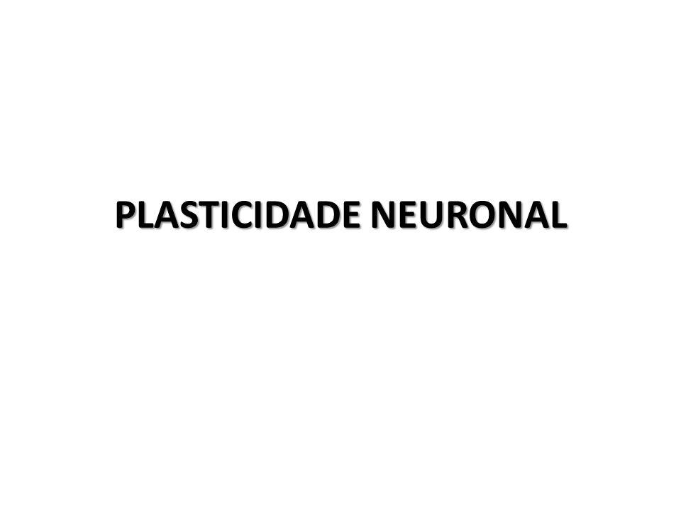 PLASTICIDADE NEURONAL
