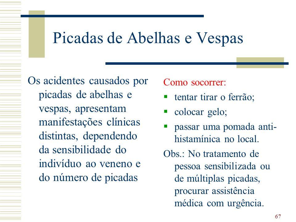 Picadas de Abelhas e Vespas