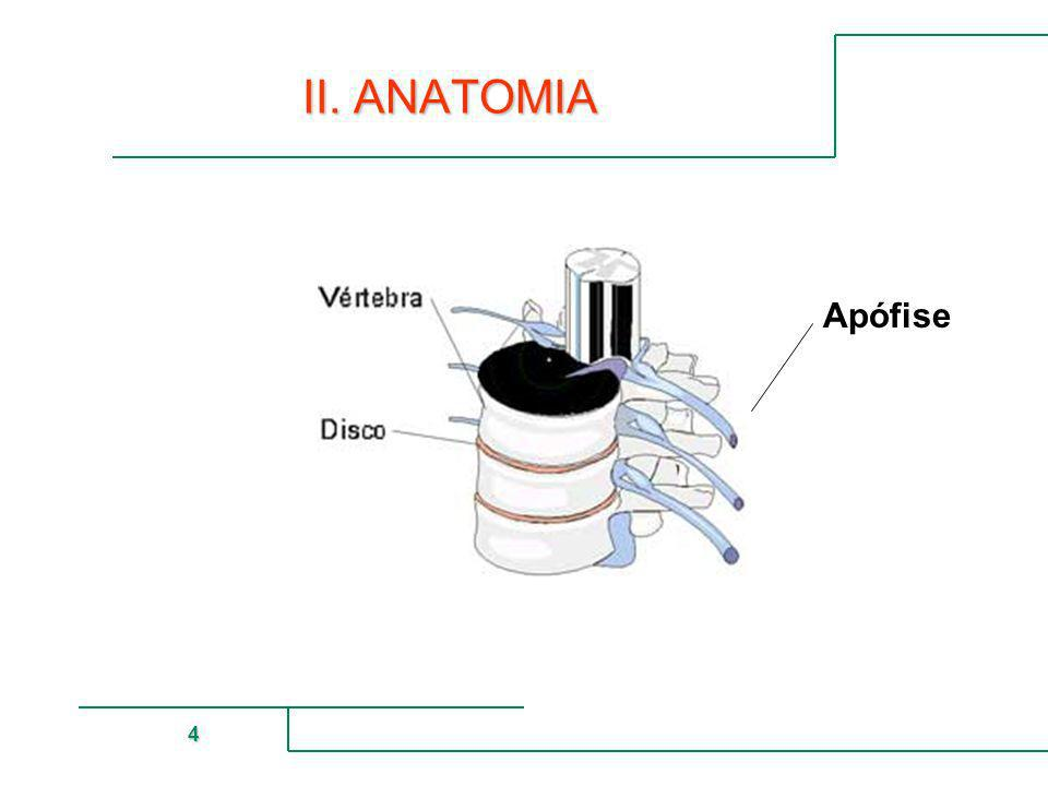 II. ANATOMIA Apófise