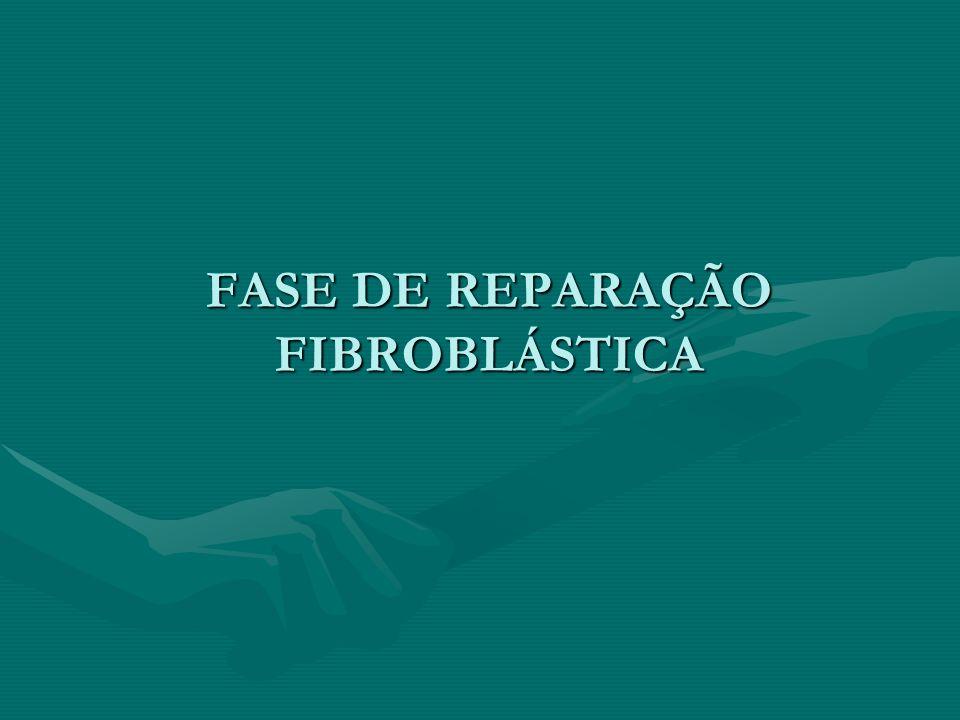 FASE DE REPARAÇÃO FIBROBLÁSTICA