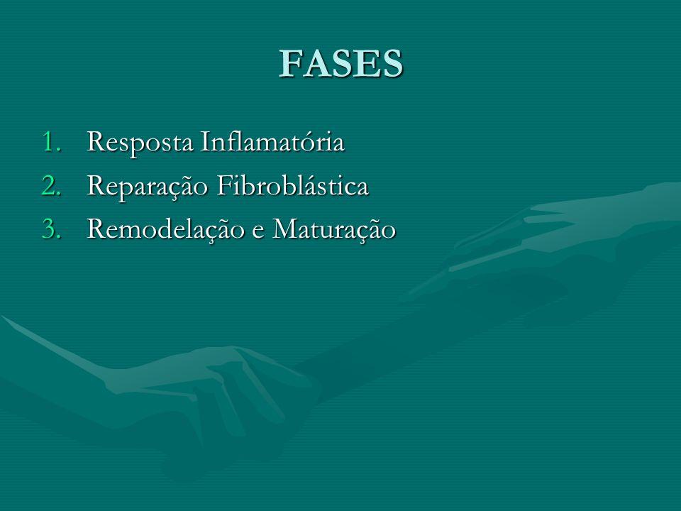 FASES Resposta Inflamatória Reparação Fibroblástica