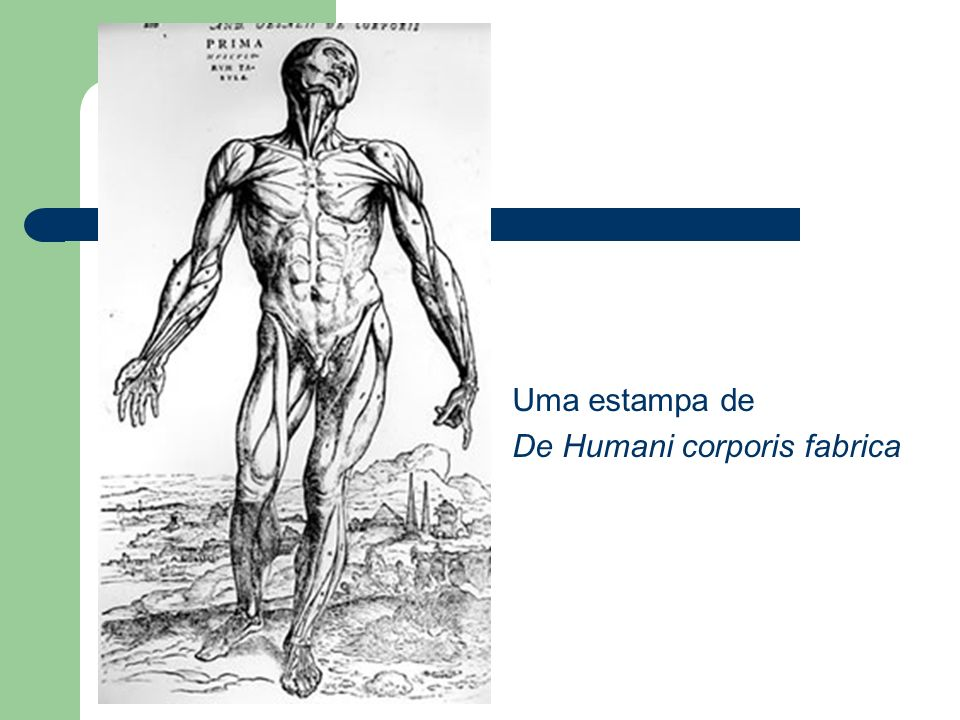Uma estampa de De Humani corporis fabrica