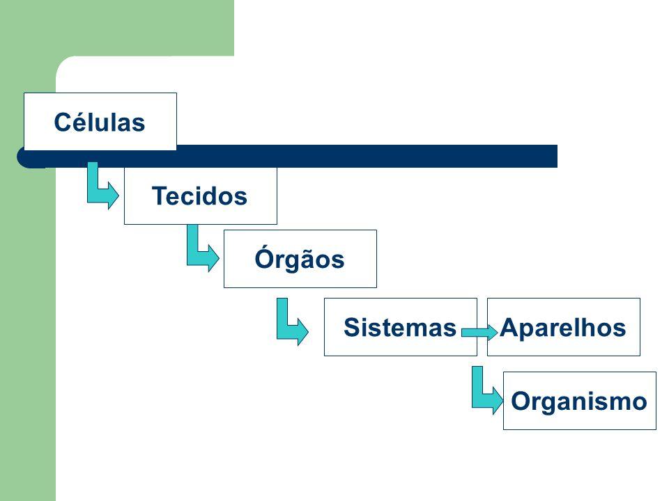 Células Tecidos Órgãos Sistemas Aparelhos Organismo
