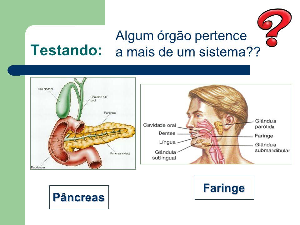 Testando: Algum órgão pertence a mais de um sistema Faringe Pâncreas