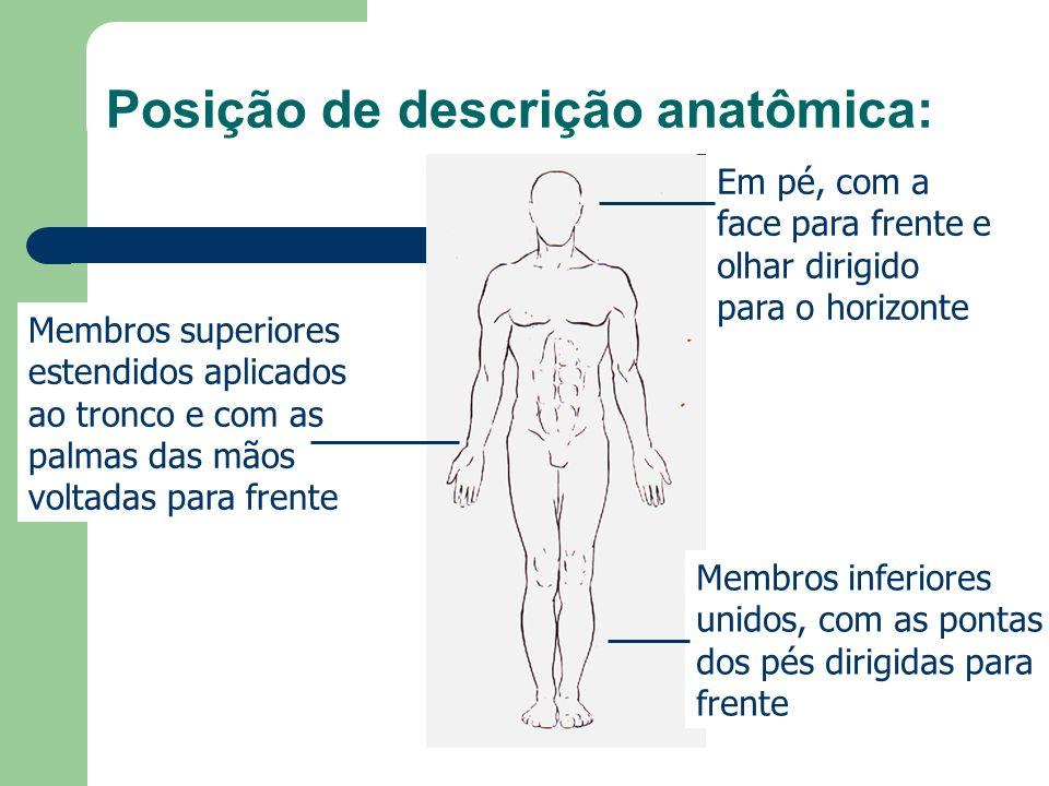 Posição de descrição anatômica: