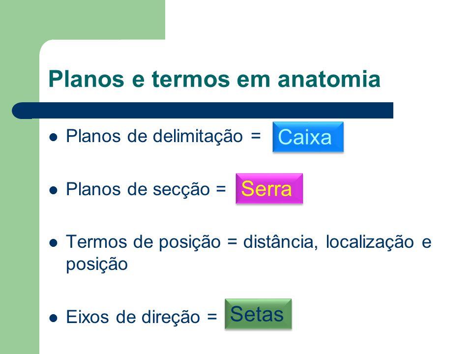 Planos e termos em anatomia