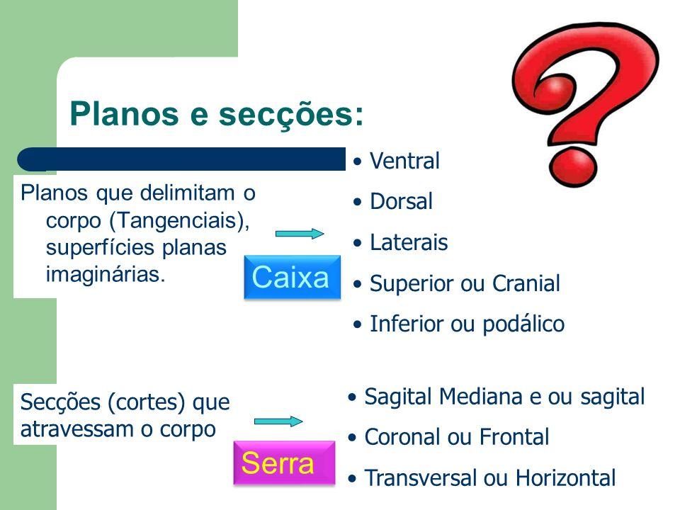 Planos e secções: Caixa Serra Ventral Dorsal