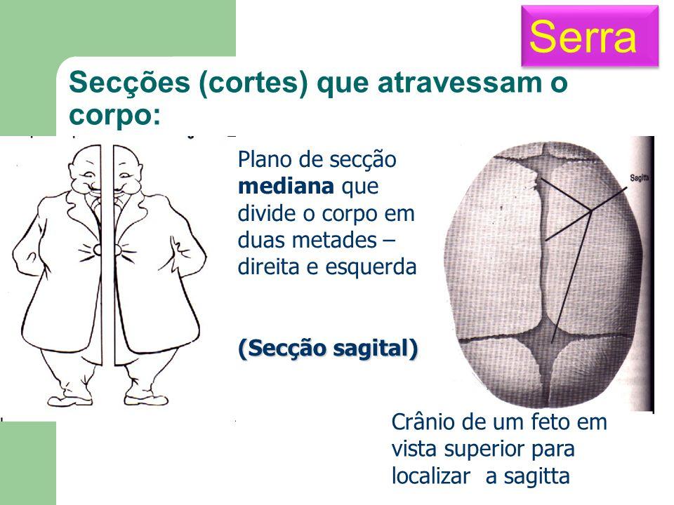 Secções (cortes) que atravessam o corpo: