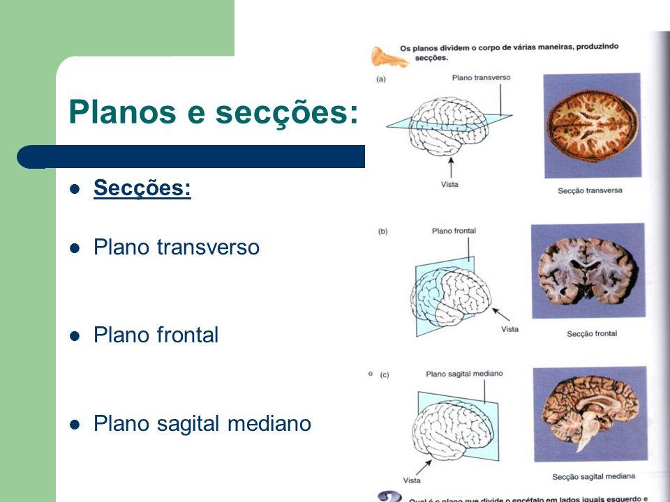 Planos e secções: Secções: Plano transverso Plano frontal