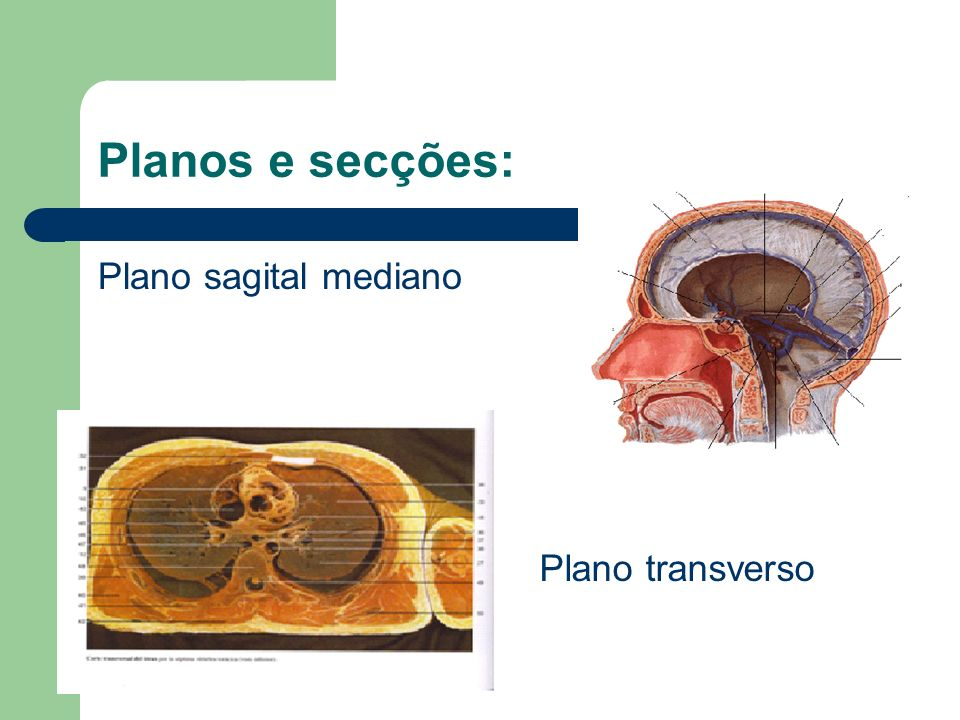Planos e secções: Plano sagital mediano Plano transverso