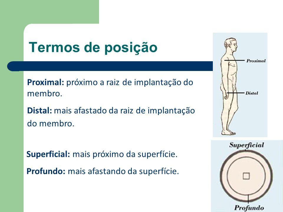Termos de posição Proximal: próximo a raiz de implantação do membro.