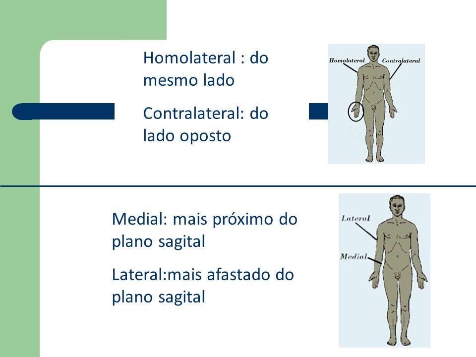 Homolateral : do mesmo lado