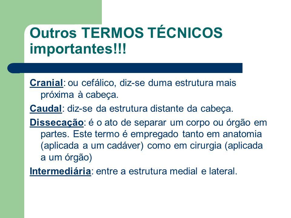 Outros TERMOS TÉCNICOS importantes!!!