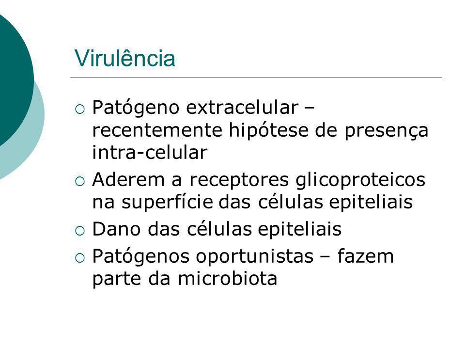 Virulência Patógeno extracelular – recentemente hipótese de presença intra-celular.