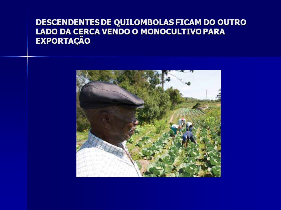 DESCENDENTES DE QUILOMBOLAS FICAM DO OUTRO LADO DA CERCA VENDO O MONOCULTIVO PARA EXPORTAÇÃO