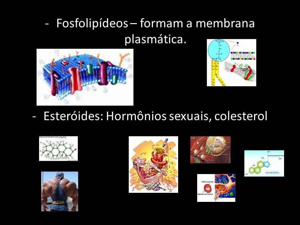 Fosfolipídeos – formam a membrana plasmática.