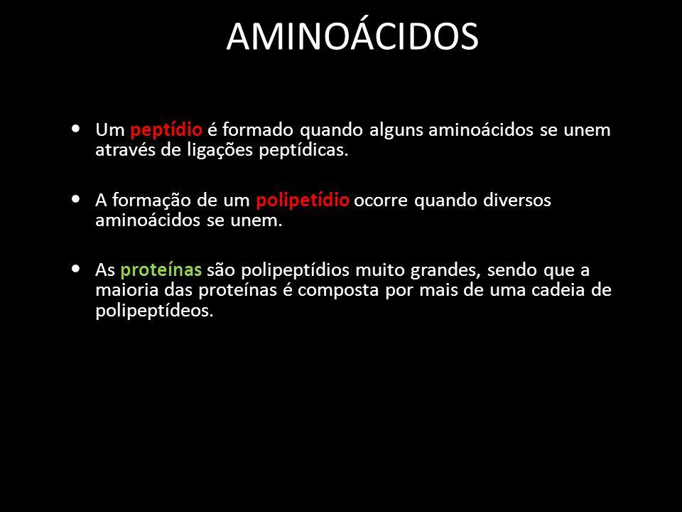 AMINOÁCIDOS Um peptídio é formado quando alguns aminoácidos se unem através de ligações peptídicas.