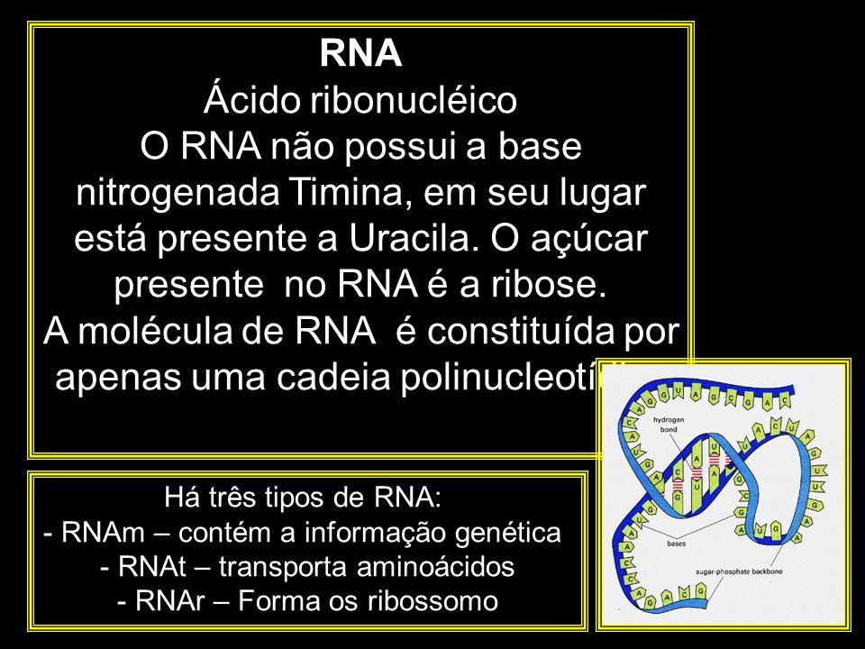 A molécula de RNA é constituída por apenas uma cadeia polinucleotídica