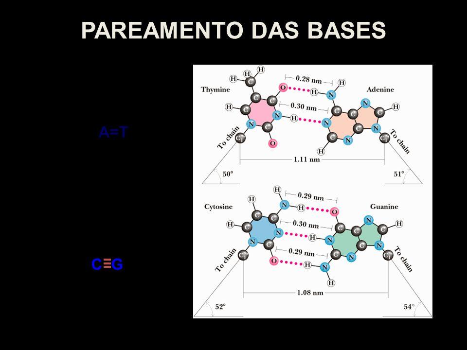 PAREAMENTO DAS BASES A=T C G