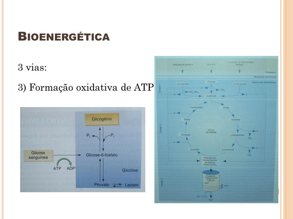 Bioenergética 3 vias: 3) Formação oxidativa de ATP