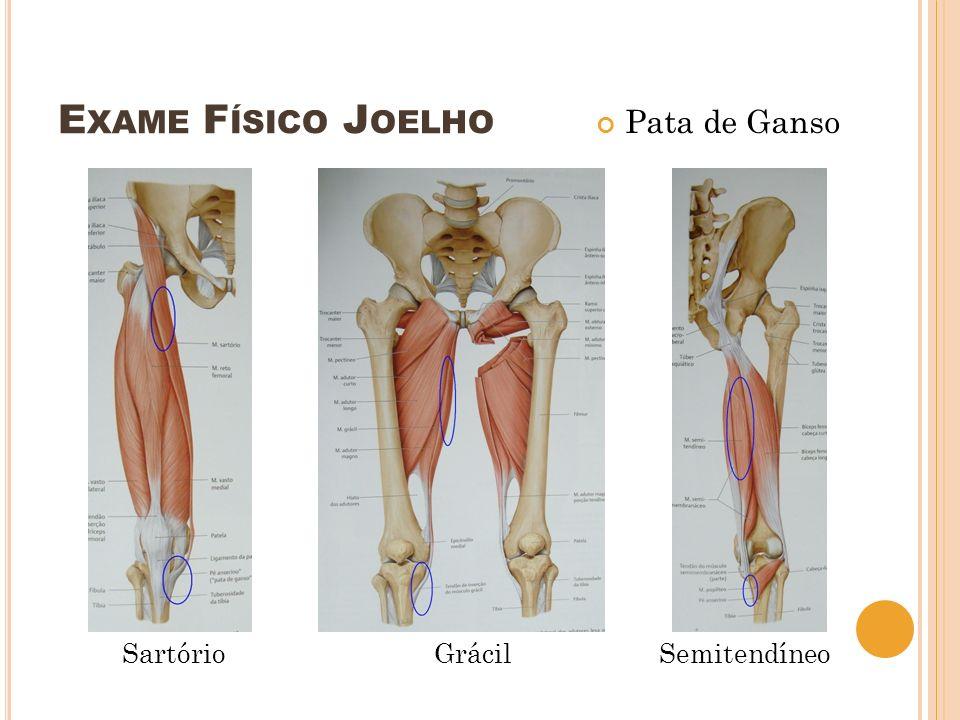 Exame Físico Joelho Pata de Ganso Sartório Grácil Semitendíneo