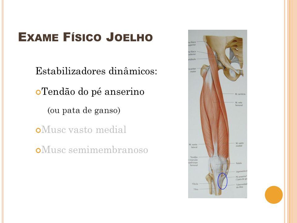 Exame Físico Joelho Estabilizadores dinâmicos: Tendão do pé anserino