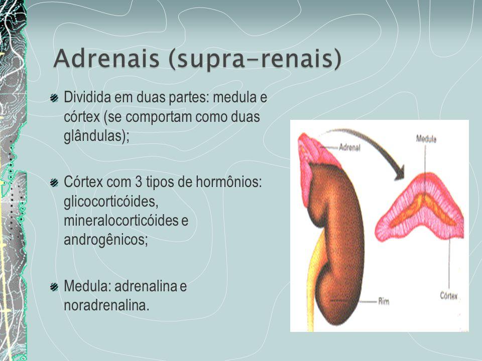 Dividida em duas partes: medula e córtex (se comportam como duas glândulas);