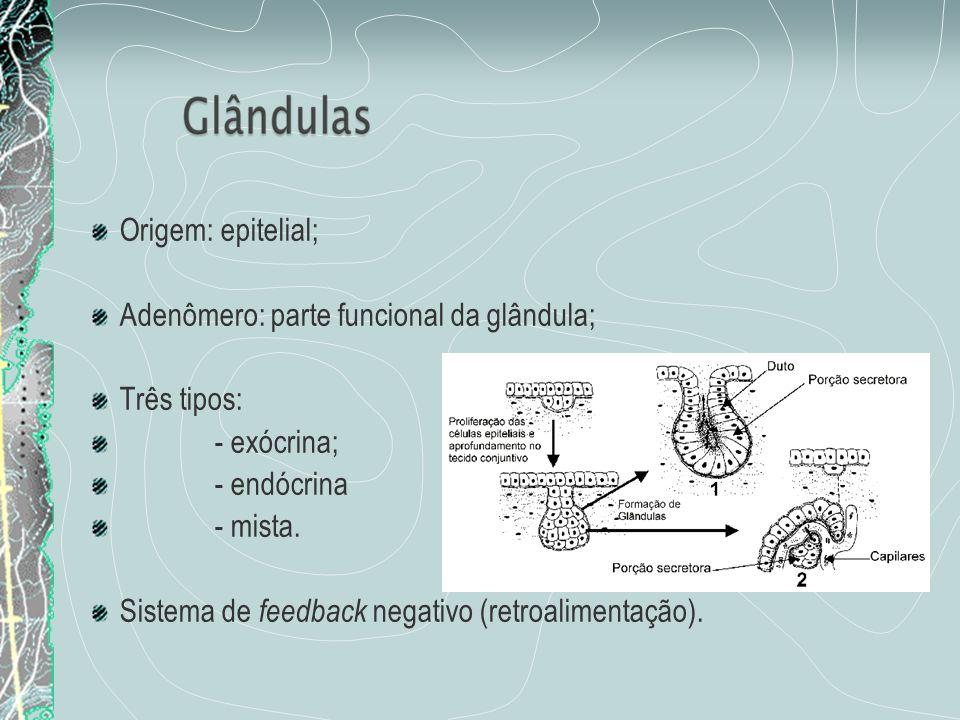 Origem: epitelial;Adenômero: parte funcional da glândula; Três tipos: - exócrina; - endócrina. - mista.