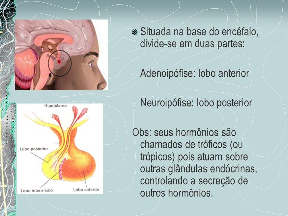 Situada na base do encéfalo, divide-se em duas partes: