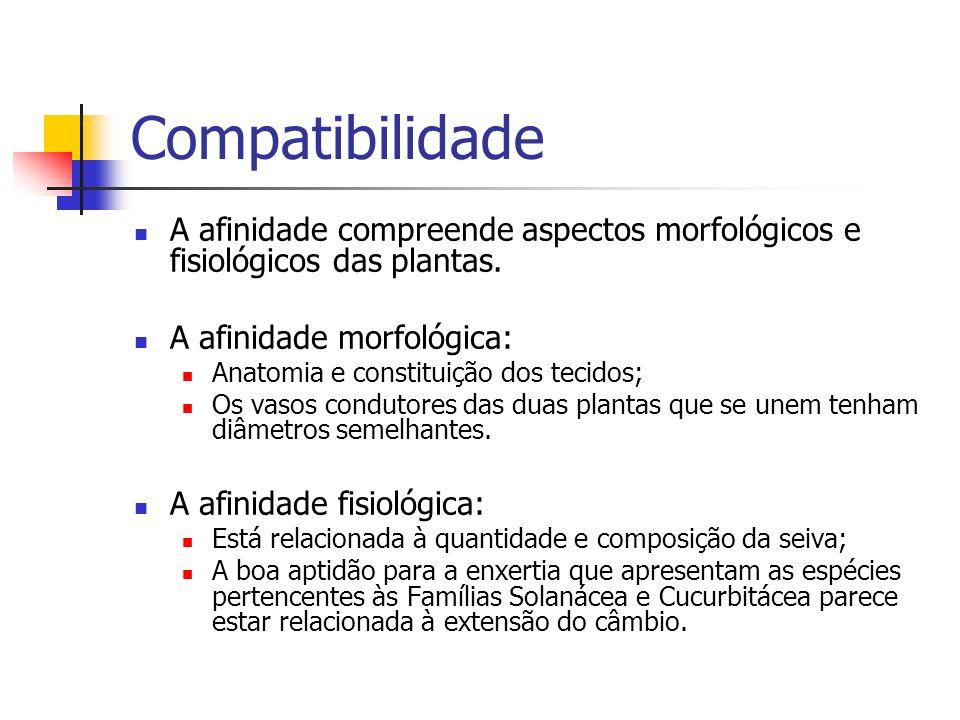Compatibilidade A afinidade compreende aspectos morfológicos e fisiológicos das plantas. A afinidade morfológica:
