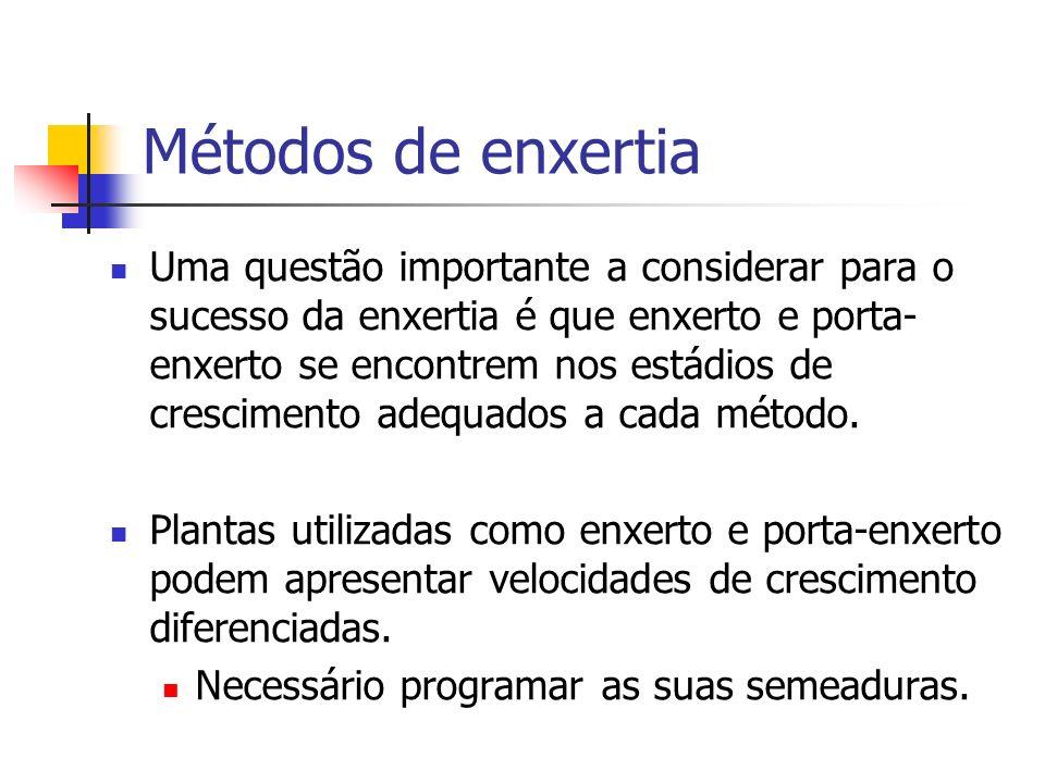 Métodos de enxertia