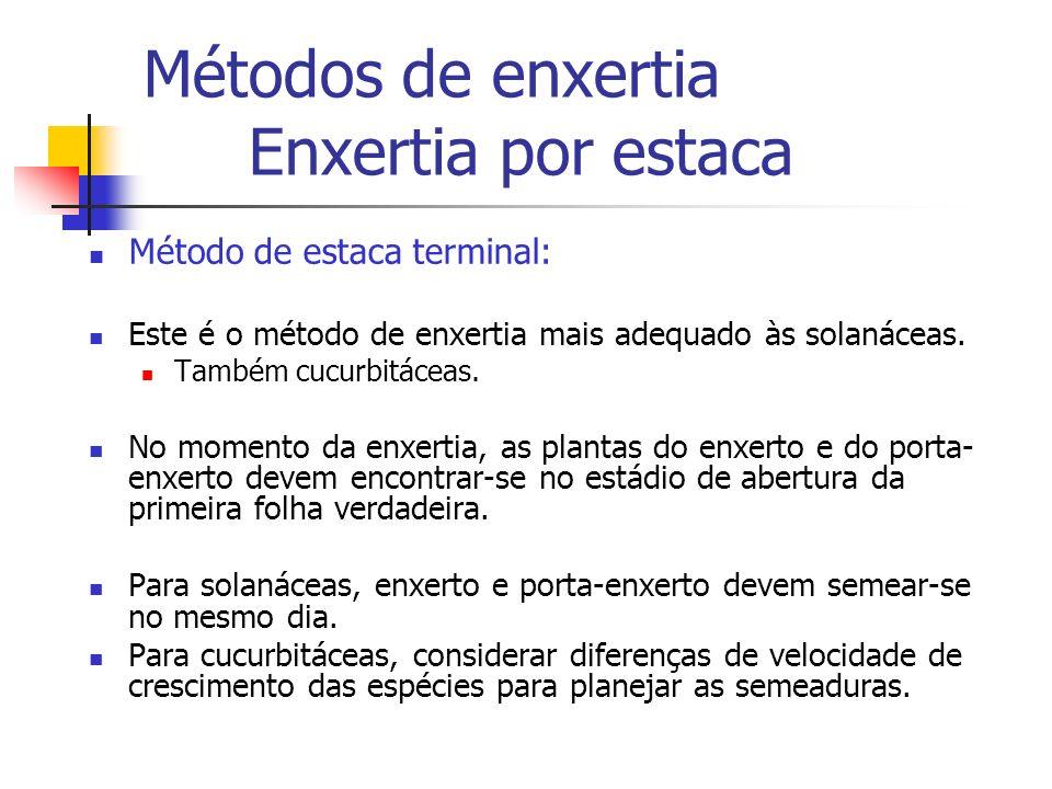 Métodos de enxertia Enxertia por estaca