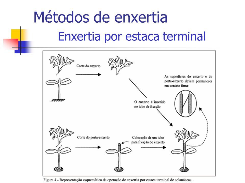 Métodos de enxertia Enxertia por estaca terminal