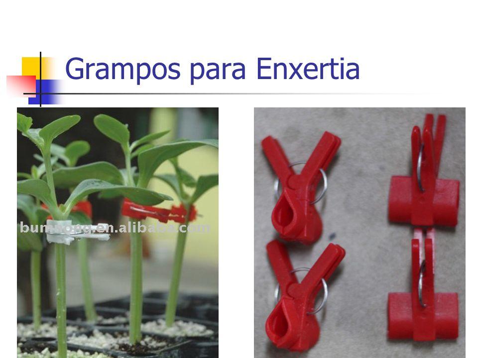 Grampos para Enxertia
