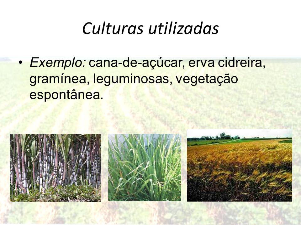 Culturas utilizadasExemplo: cana-de-açúcar, erva cidreira, gramínea, leguminosas, vegetação espontânea.