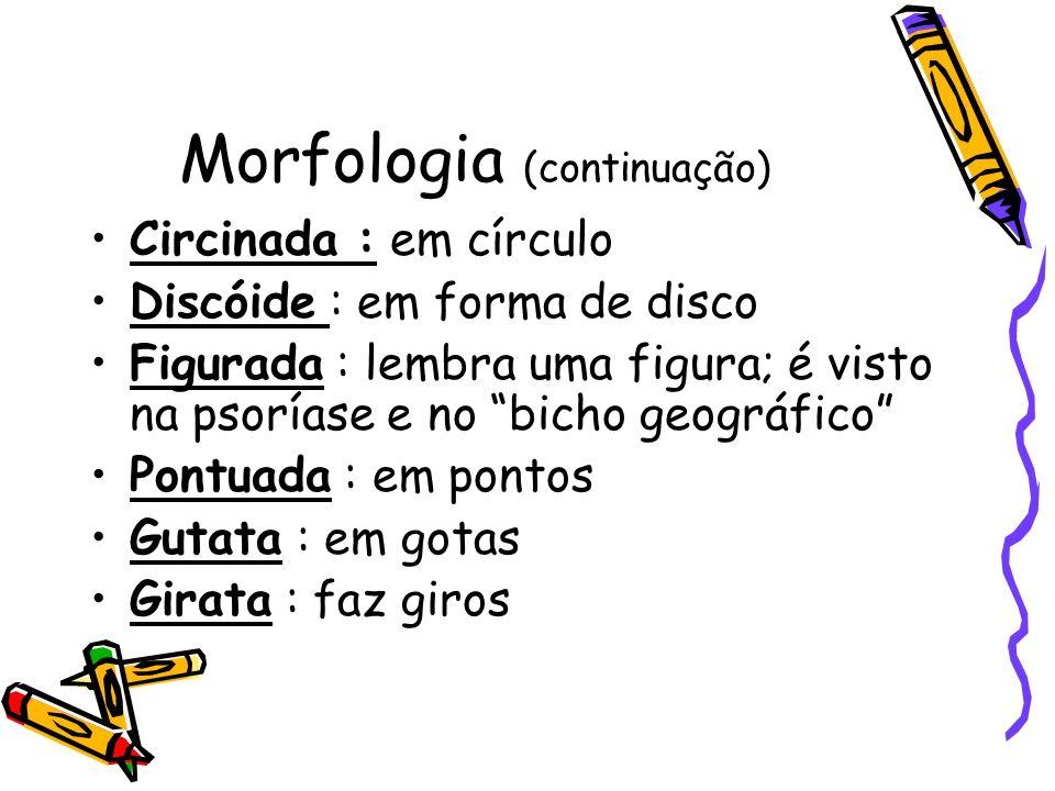 Morfologia (continuação)