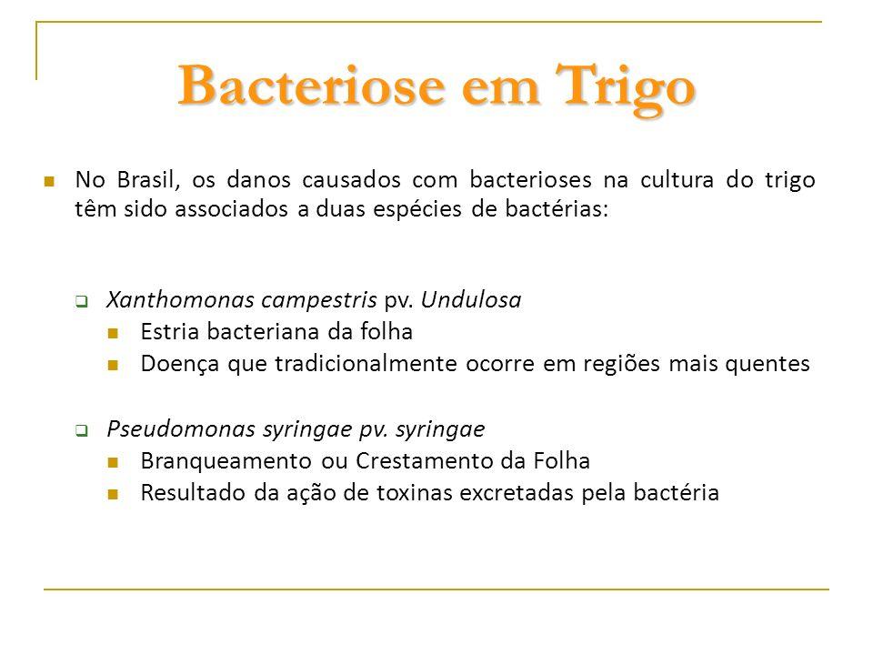 Bacteriose em Trigo No Brasil, os danos causados com bacterioses na cultura do trigo têm sido associados a duas espécies de bactérias: