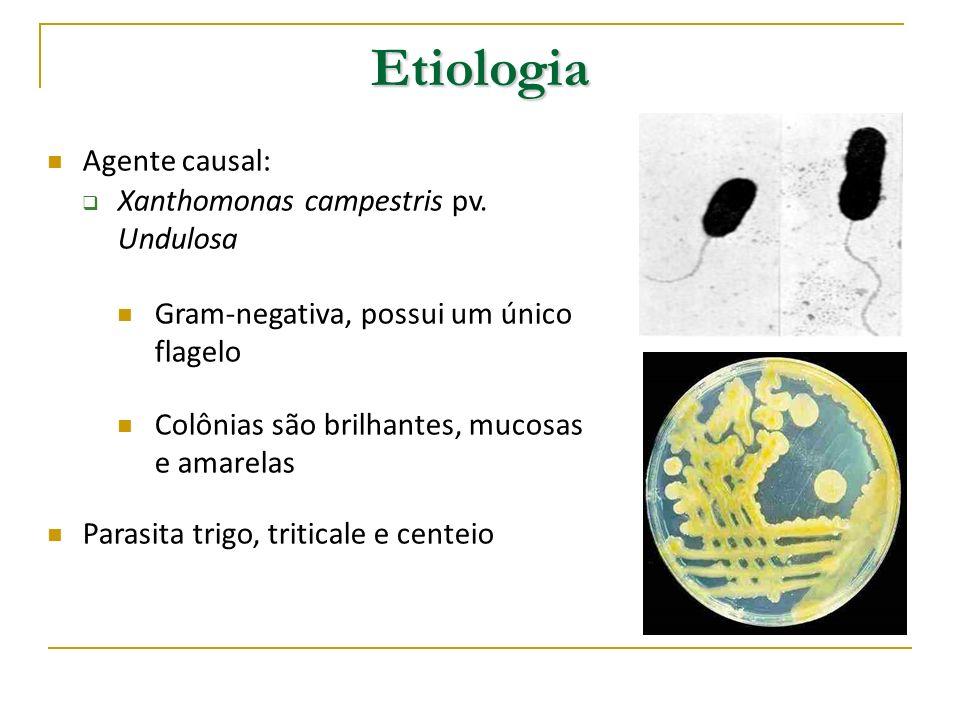 Etiologia Agente causal: Xanthomonas campestris pv. Undulosa