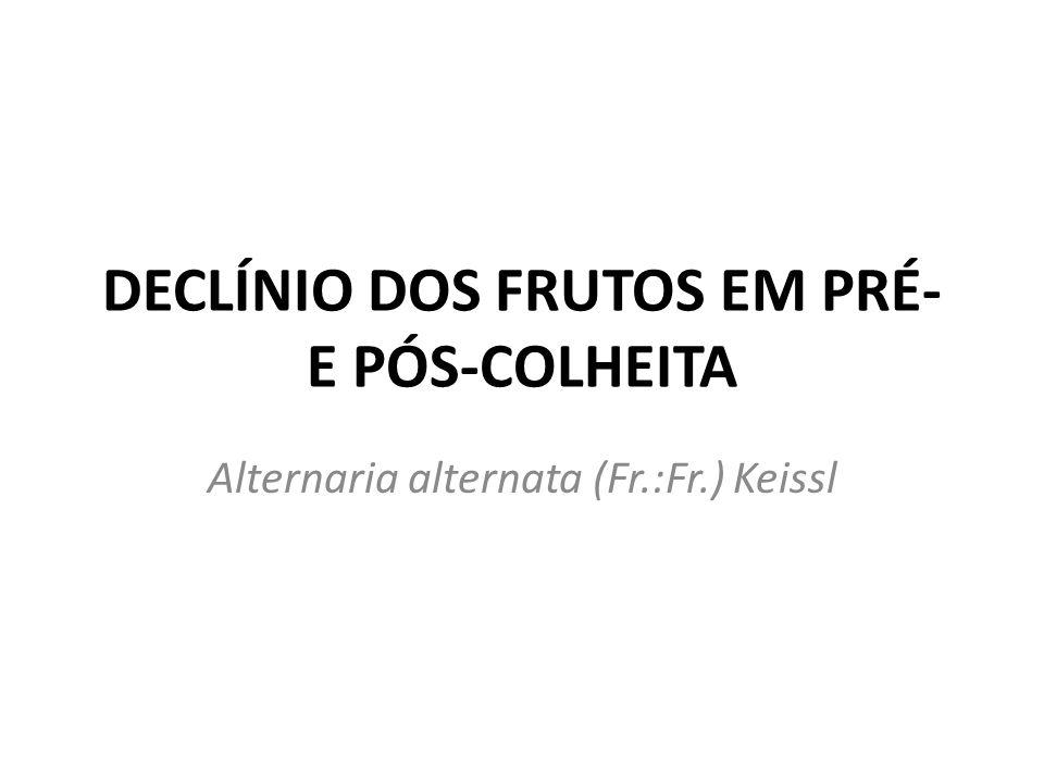 DECLÍNIO DOS FRUTOS EM PRÉ- E PÓS-COLHEITA
