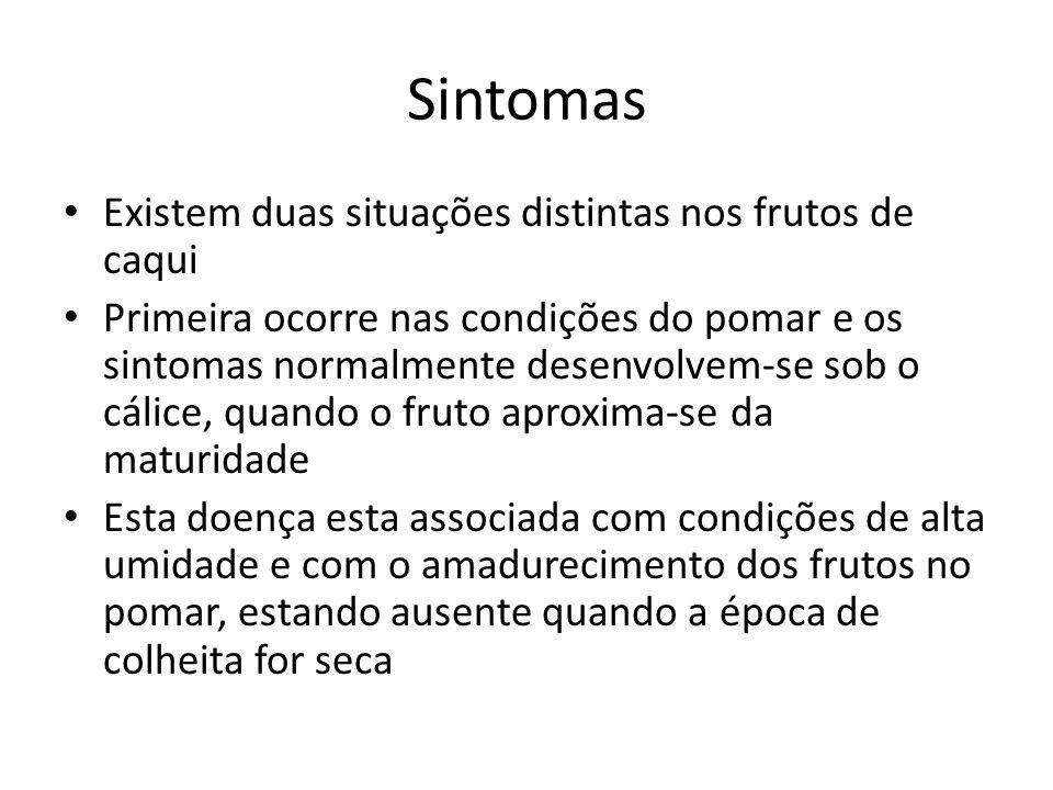 Sintomas Existem duas situações distintas nos frutos de caqui