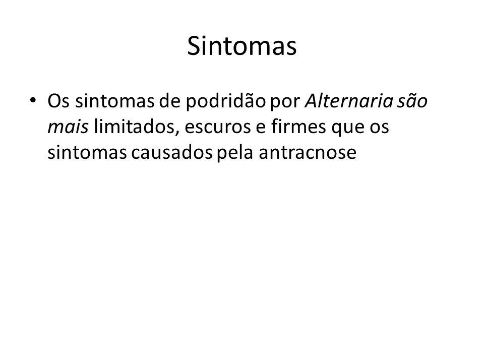 Sintomas Os sintomas de podridão por Alternaria são mais limitados, escuros e firmes que os sintomas causados pela antracnose.