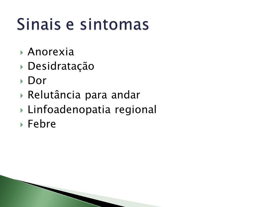 Sinais e sintomas Anorexia Desidratação Dor Relutância para andar