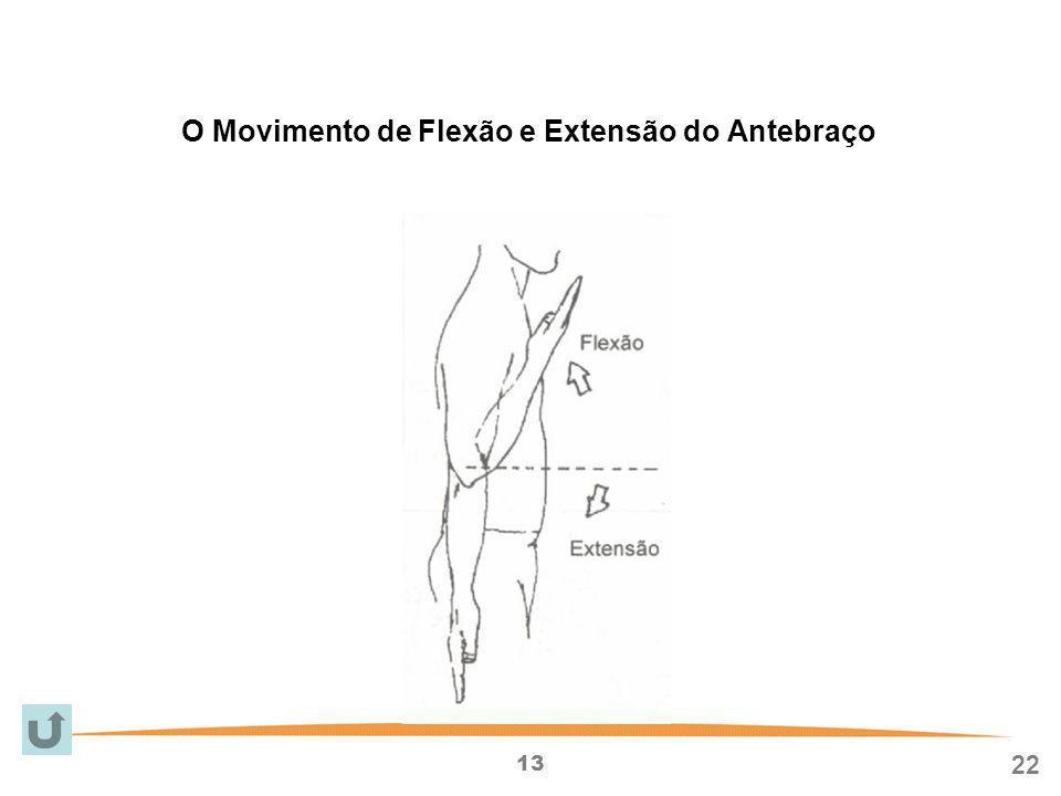 O Movimento de Flexão e Extensão do Antebraço