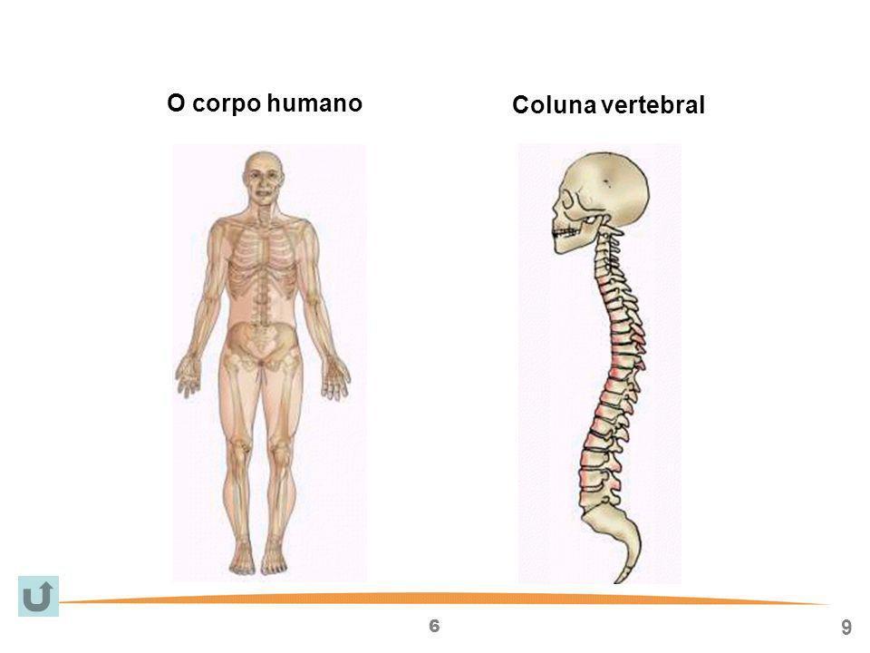O corpo humano Coluna vertebral