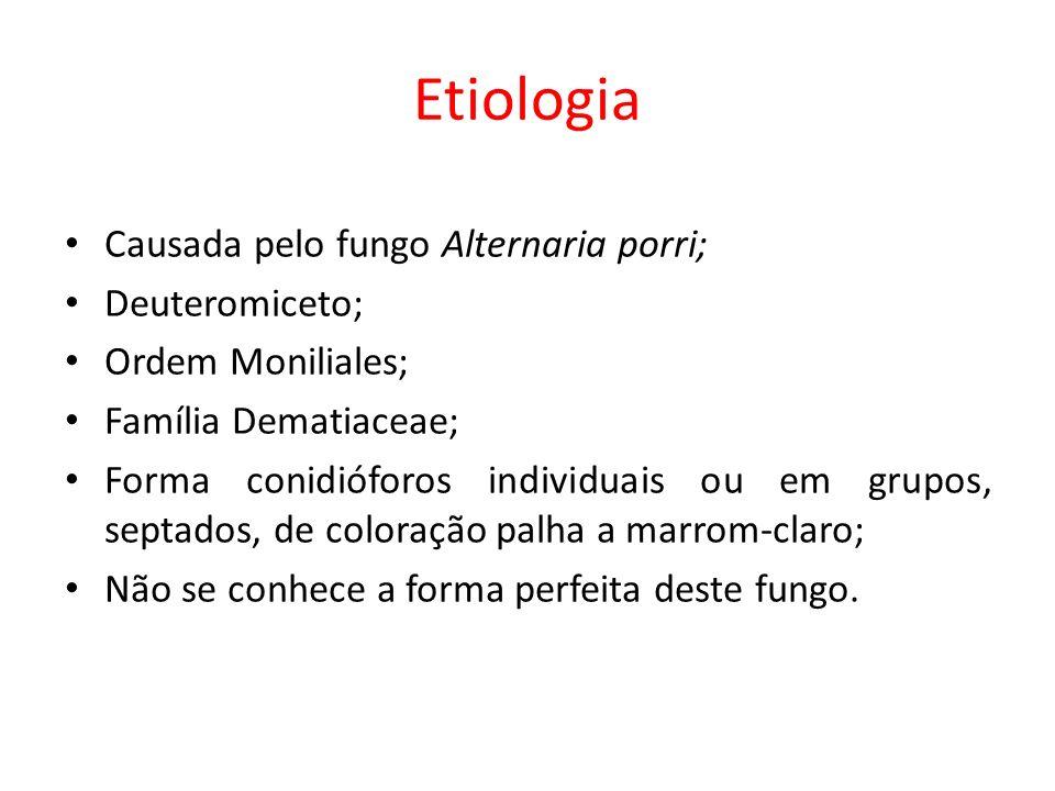 Etiologia Causada pelo fungo Alternaria porri; Deuteromiceto;