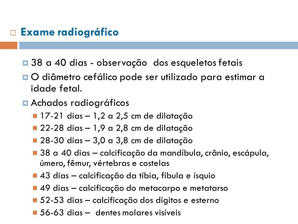 Exame radiográfico 38 a 40 dias - observação dos esqueletos fetais