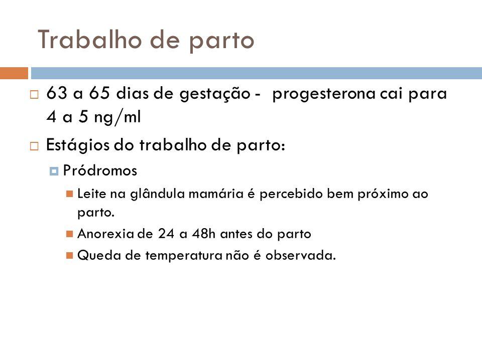 Trabalho de parto 63 a 65 dias de gestação - progesterona cai para 4 a 5 ng/ml. Estágios do trabalho de parto: