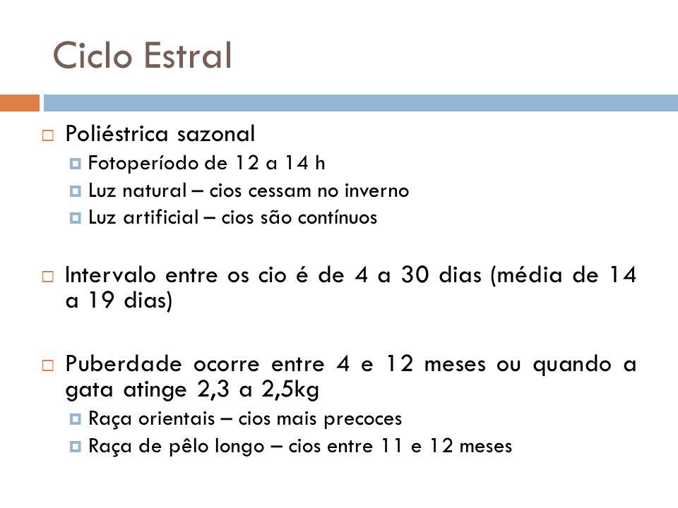 Ciclo Estral Poliéstrica sazonal