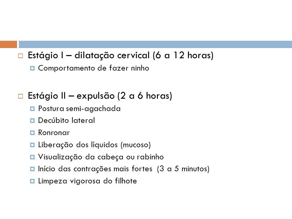 Estágio I – dilatação cervical (6 a 12 horas)