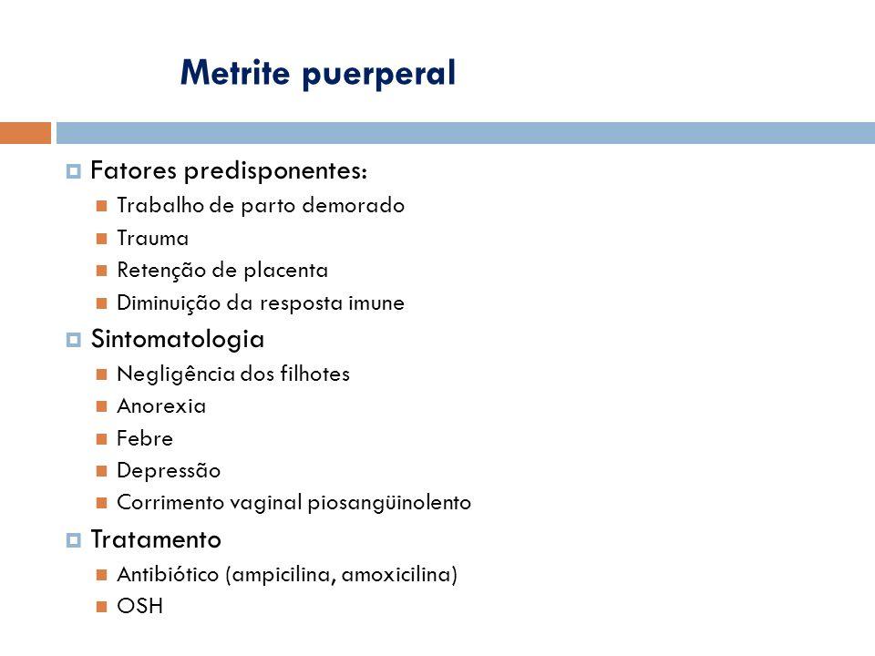 Metrite puerperal Fatores predisponentes: Sintomatologia Tratamento